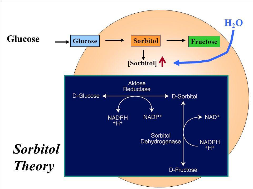 H2O Glucose Sorbitol Fructose [Sorbitol] Sorbitol Theory